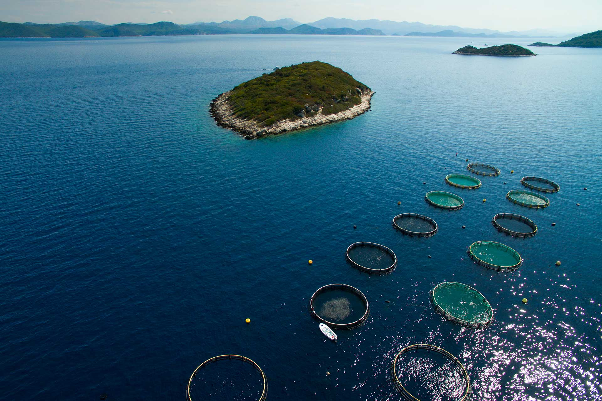 Riba Mljet Fisheries - nets floating on the open sea
